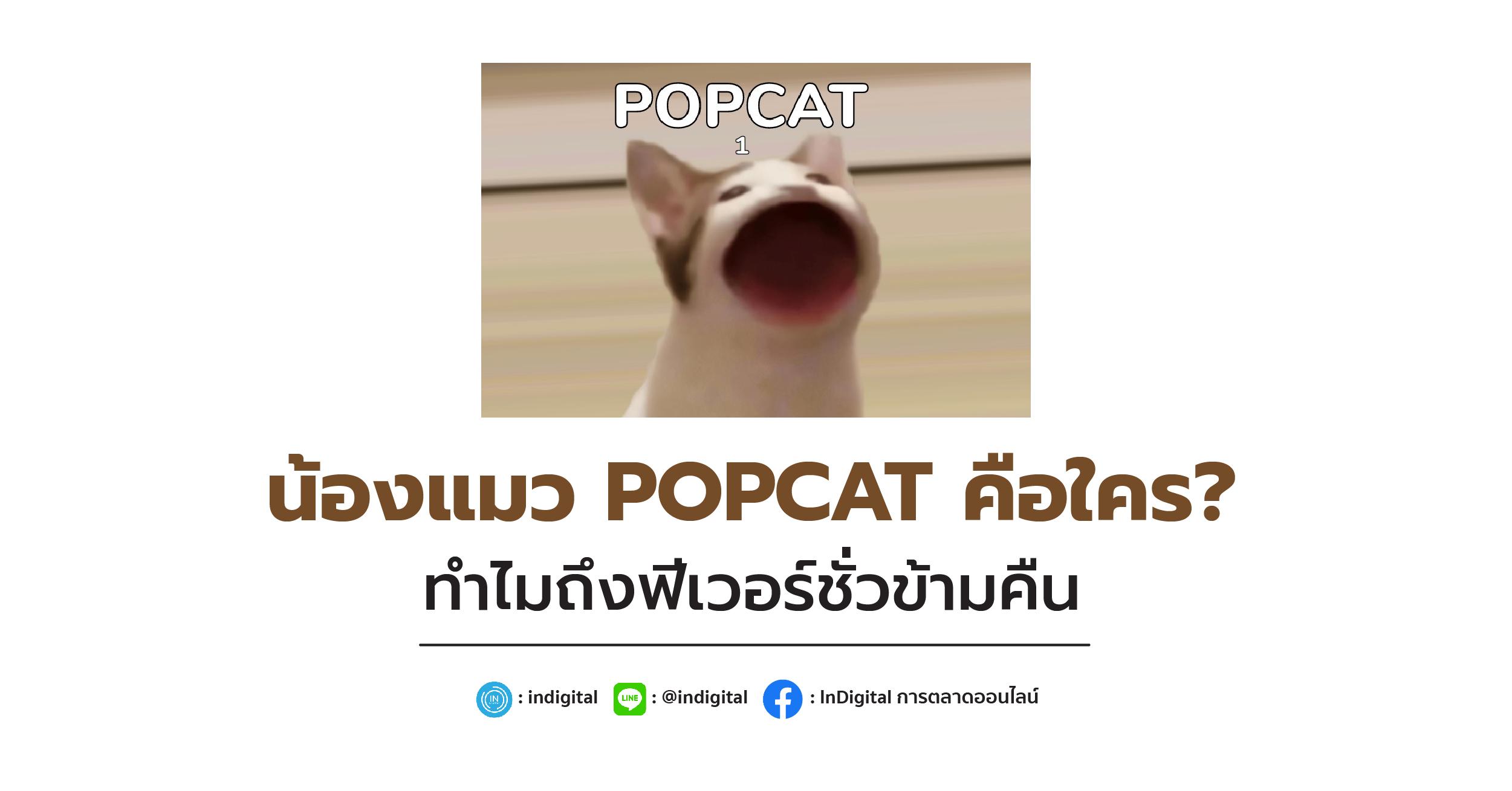 น้องแมว POPCAT คือใคร? ทำไมถึงฟีเวอร์ชั่วข้ามคืน
